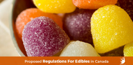 Cannabis gummy bears. Cannabis edibles. Proposed Regulations For Edibles in Canada. when are edibles legal in canada.