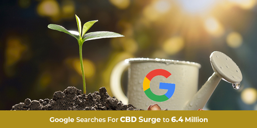 Plant growing with watering cup with google logo. CBD search engine marketing company.