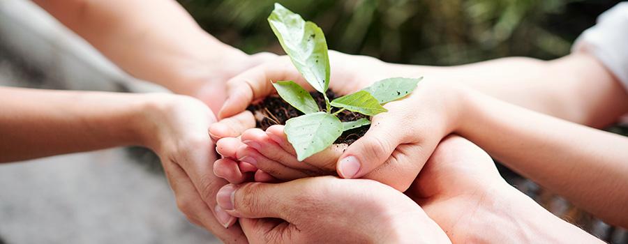 people growing plants. how to market marijuana edibles in usa and canada. Marijuana marketing and SEO agency.