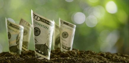 rolled bank notes on soil. marketing marijuana edibles. marijuana marketing ideas. Cannabis marketing company.